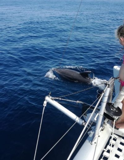 Enjoy watching dolphins from boat in Malaga-min